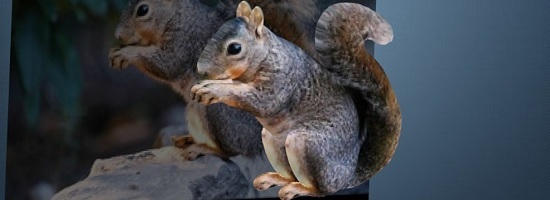 squirrelfeatured