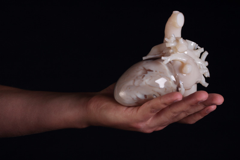 Hand holding 3D-printed heart anatomical model